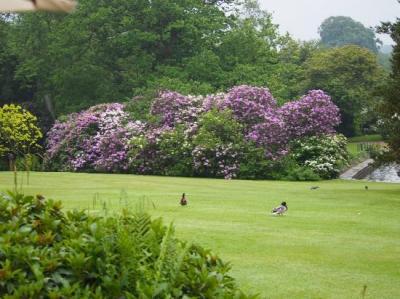 Сады усадьбы Пэшли, Великобритания