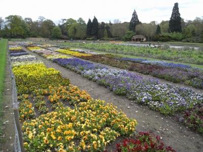 Сады Уизли, Великобритания
