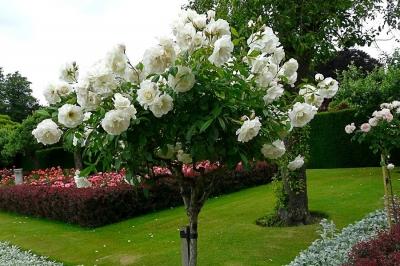 Сады поместья Пенсхерст, Великобритания