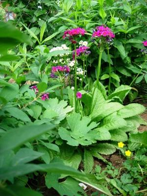 Декоративное растениеводство - цветоводство
