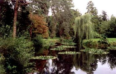 Дендрарий и сады Фота, Ирландия