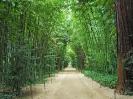 Парк бамбуков в Прафрансе, Франция