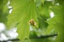Практика по защите растений