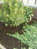 Практика в совхозе. Оранжереи