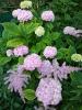 Цветоводство с основами агротехники и цветочного оформления