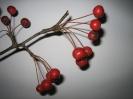 Яблоня Каидо