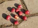 Яблоня Сиверса Плоды