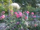 Розы и вербена