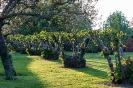 Сад Тимберс, Англия
