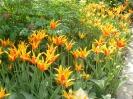 Весеннее цветение в Аптекарском огороде