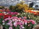 Весеннее выездное занятие в Ботанический сад МГУ/Аптекарский огород