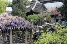 Сад Каменных Львов - Ши Зи Линь Юань, КНР